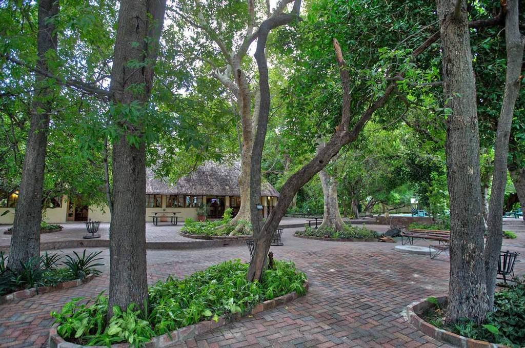 Leafy promenade at Island Safari Lodge