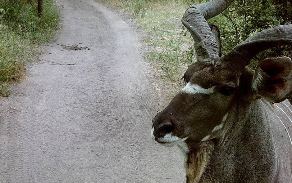 Kudu, Stables Pass