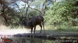 Kudu, Stables Waterhole