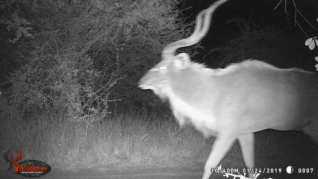 Kudu - Sticky Glade Drive