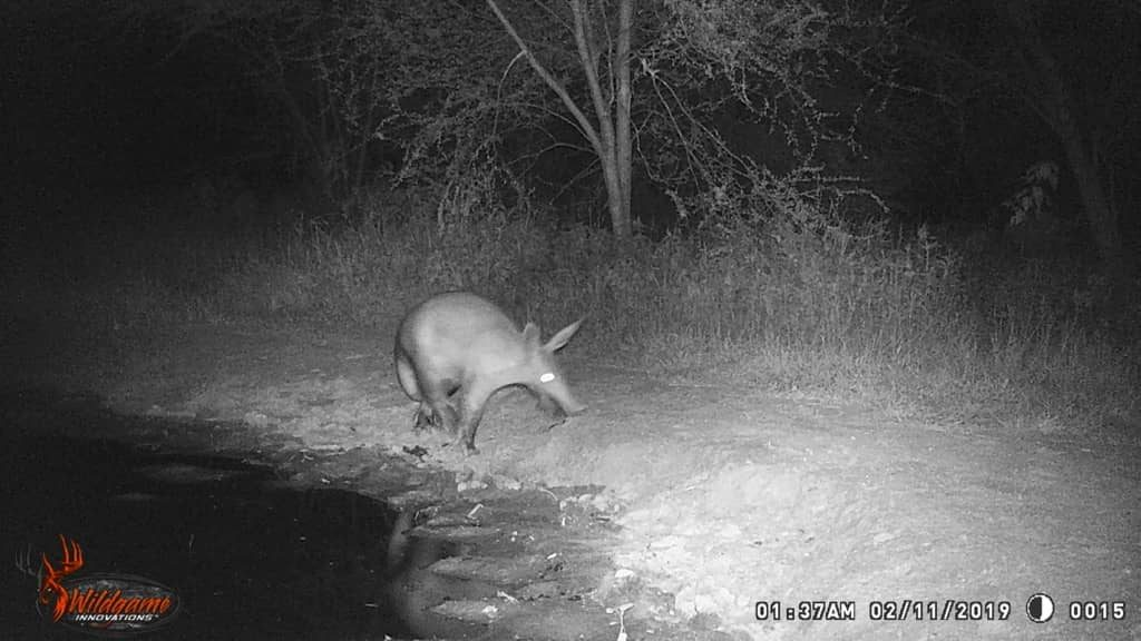 Aardvark - Stables Water Hole