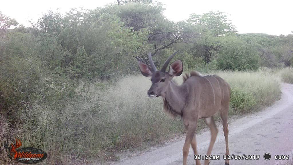 Kudu - Lichen Lane