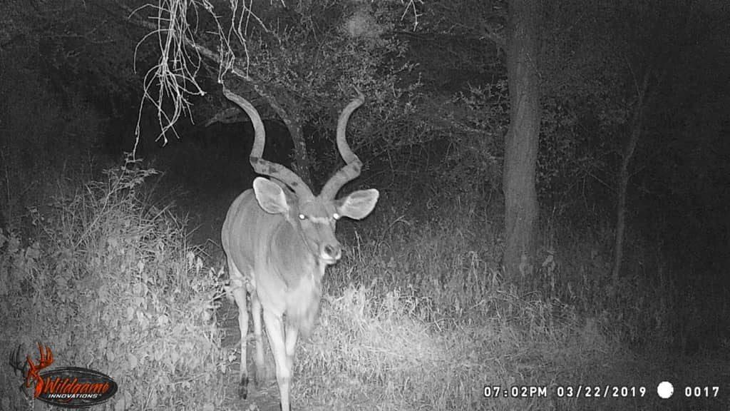 Kudu - Prestige to Fenlands Track