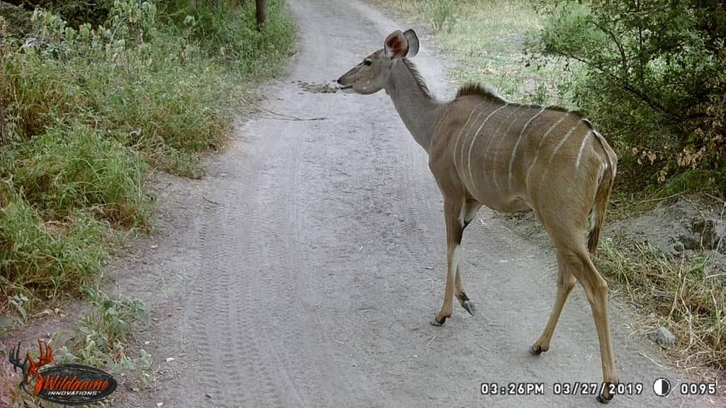 Kudu - Stables Pass
