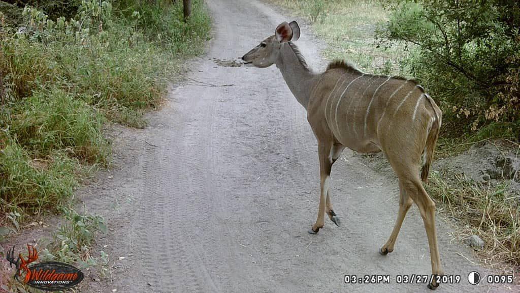 Kudu - Stables Pass