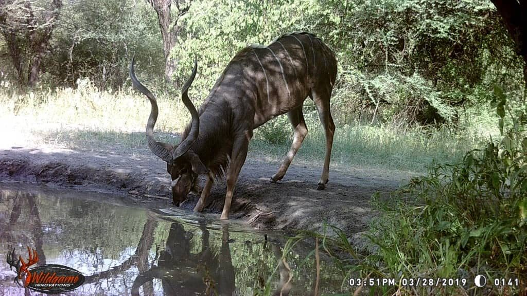 Kudu - Stables Water Hole